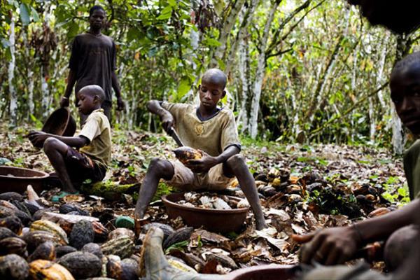 Esclavitud en la industria del chocolate