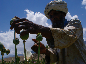 Un hombre recolecta opio en la provincia de Badakhshan, al noreste de Afganistán / Flickr