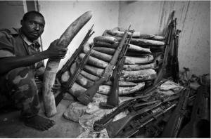 The Environmental Crime Crisis, NNUU & Interpol