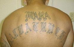 Marasalvatrucha13