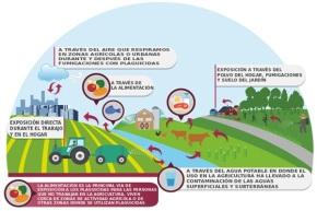 Infografía sobre el glifosato / Greenpeace